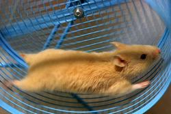 [Imagem: hamster.jpg]